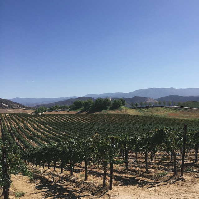 Temecula wine country :: Southern California