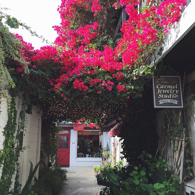 Carmel, you are too cute! Twinkle lights under the bougainvillea canopy? Yes please!